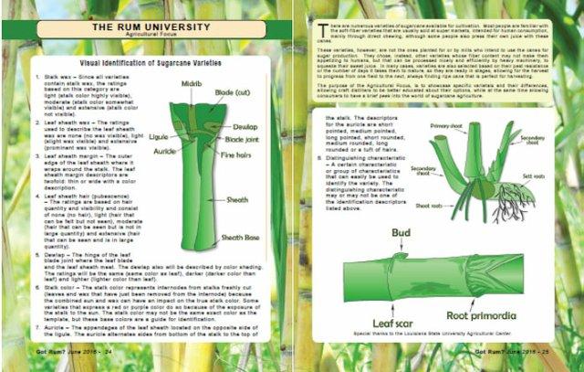 agriculture june 4.jpg