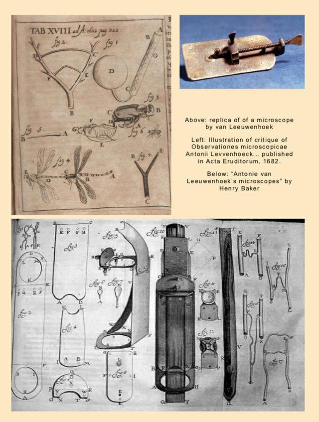 Illustrations of Portrait of antonie van leeuwenhoek work