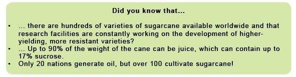 Fun facts about sugarcane