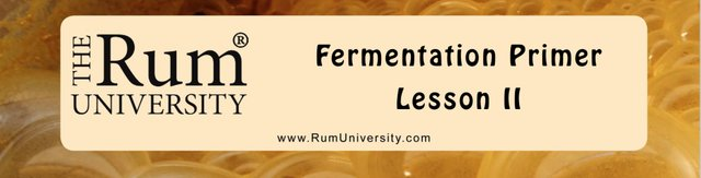 Fermentation Lesson 2