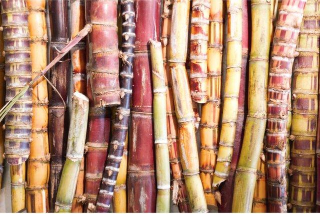 EI august sugarcane