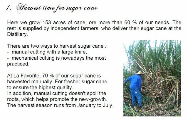 1  Harvest time.JPG