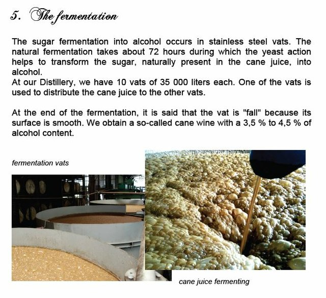 5  fermentation (2).JPG