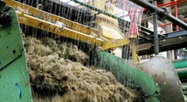 Imbibition of sugarcane