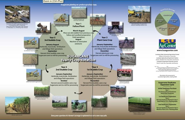 Sugarcane Crop Rotations