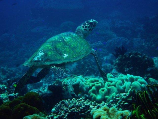 Sea turtles by Daryl