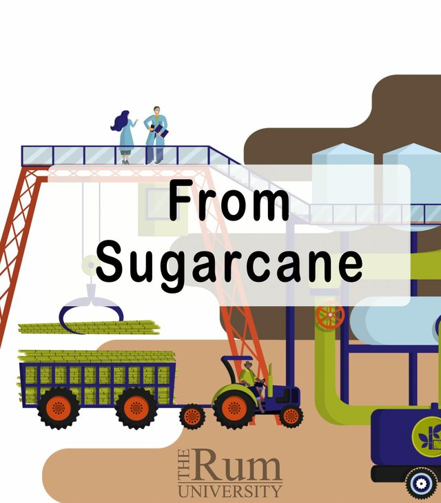 From Sugarcane